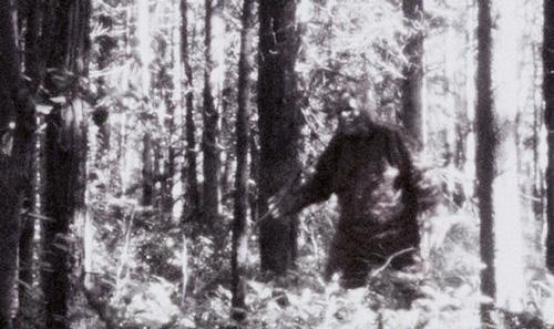 йети в лесу