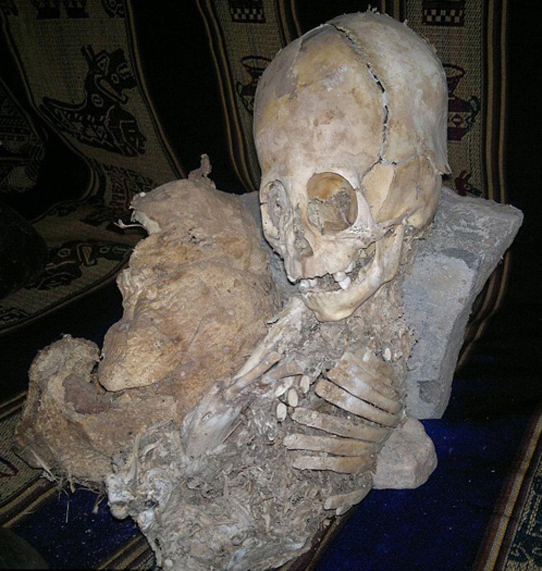 Череп, найденный р. Рикольме в Перу