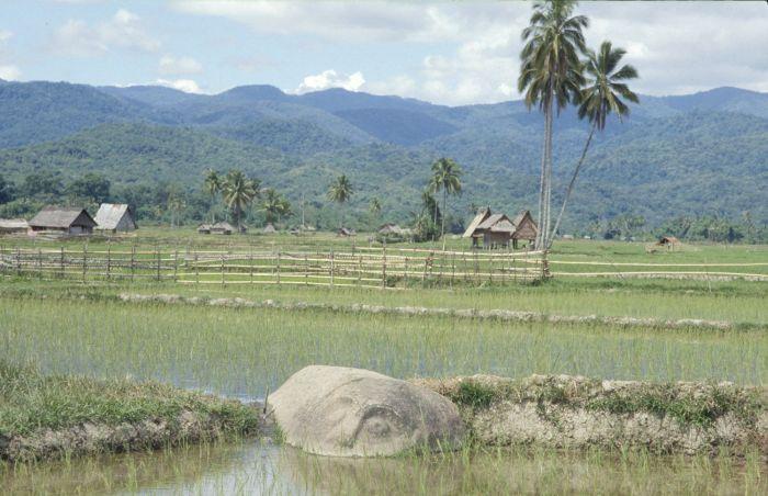 Мегалитические камни на рисовом поле