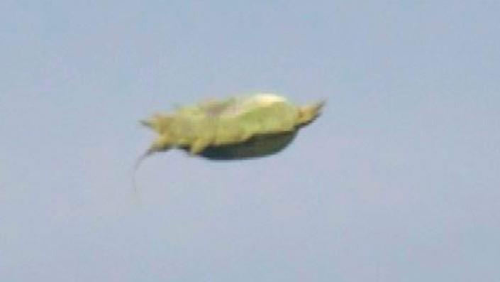 НЛО, снятое канадцем Кеном Райсом