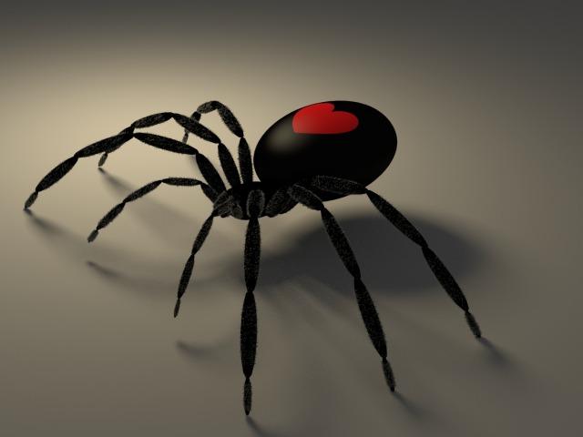 Почему нельзя убивать пауков в доме – суеверие или санитария