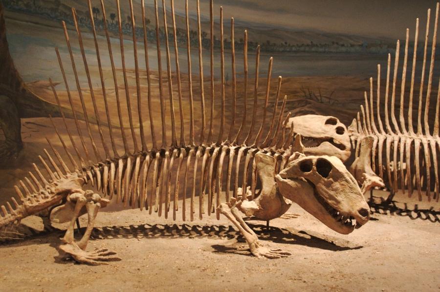 Подлинные останки динозавров