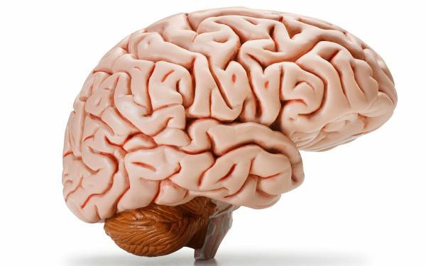 Как улучшить работу мозга и мыслительную деятельность