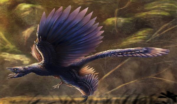Микрораптор (Microraptor)