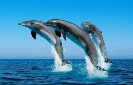 Чем питаются дельфины